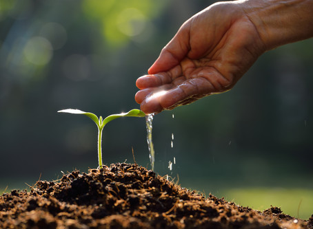 Planting Tomorrow's Seeds Today