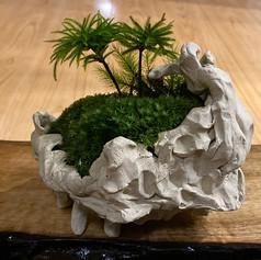日本苔アート協会