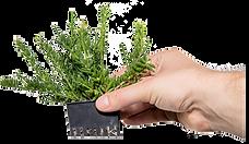 Pflanzentopf-Stecksystem-Pendularis.png