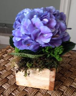 Purple Hydrangea.png