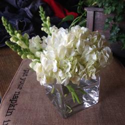 White Hydrangea.png