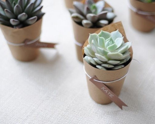 Succulent Table Decorations