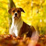 dog-dogs-wallpaper-32691594-fanpop.jpg