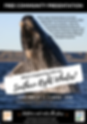 Southern Right Whales Poster A4 (1).png