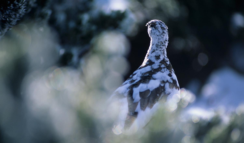 孤高の鳥に誘われ、心震えるまま撮ることを決意した