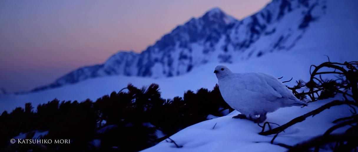 私には確かに聞こえた、白き翼の聖なるささやきが