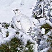 巣立ちの若鳥