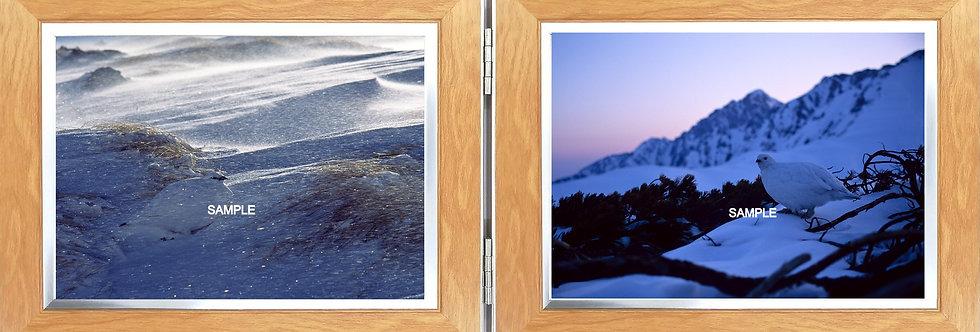 卓上写真(大)2L横x2L横 冬羽オスとメス