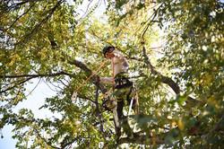 Tree Limb Removals
