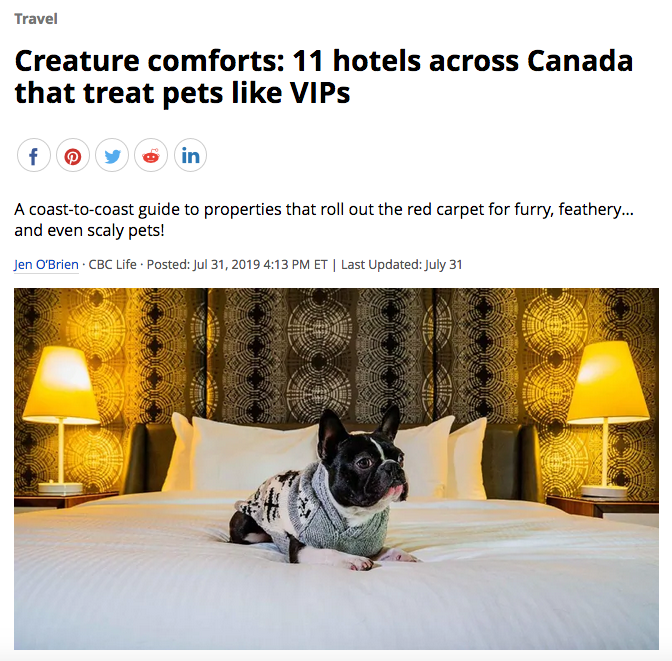 pet-friendly-hotels