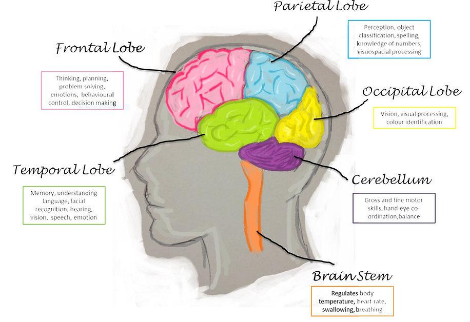 brain_labels.jpg