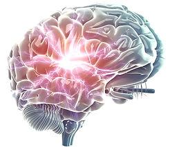 brain%20whie%20background_edited.jpg