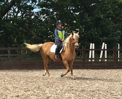 Sheffield Equestrian Centre Summer Competition 2017