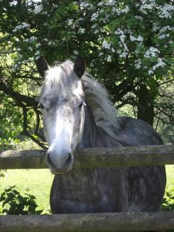 Sheffield Equestrian Centre Secret