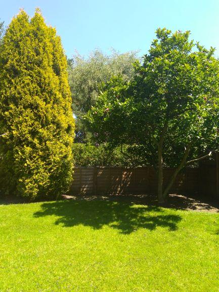 Garden Magnolia Summer (1).jpg