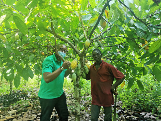 A Trip to a Cocoa Farm in Côte d'Ivoire