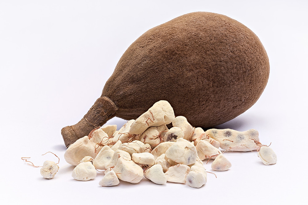 The Baobab fruit and its pulp