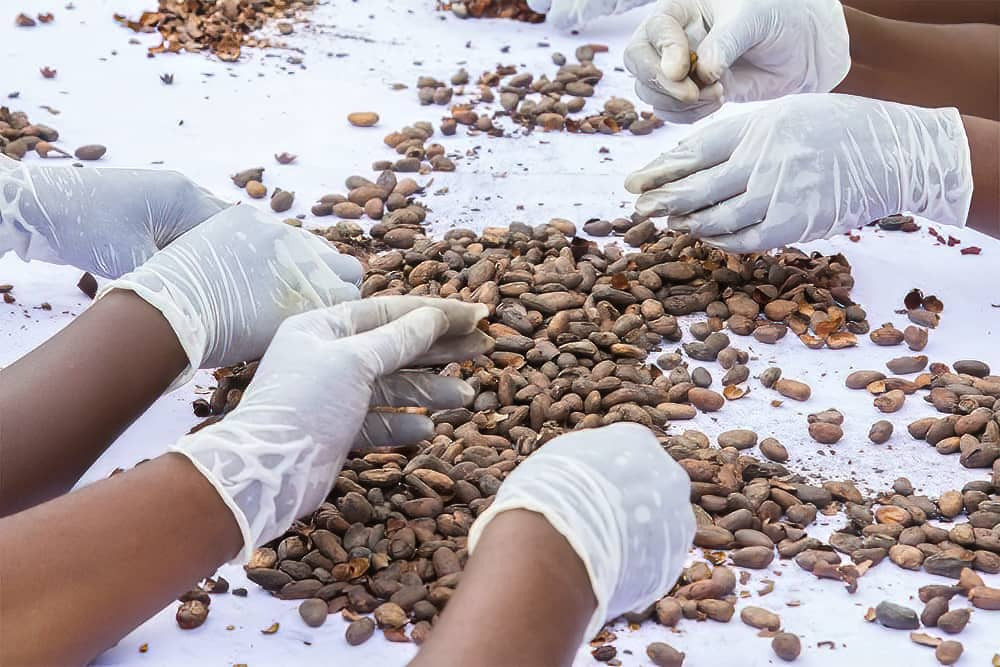 Workers separating shells from cocoa beans - image courtesy of The Chocolatier Ivoirien