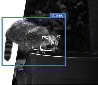 PublicSite_Resi_Video_Alternator_Raccoon