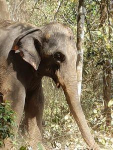 Wildlife Munnar