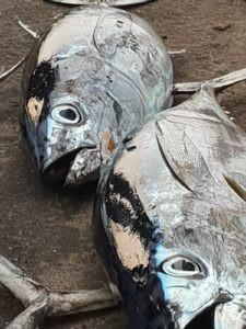 Vissen, vers uit het water