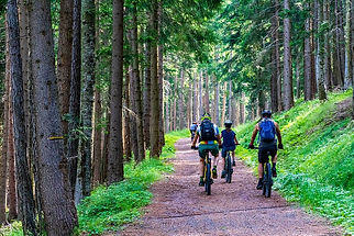 forest-forest-road-mountain-bike-e-bike-
