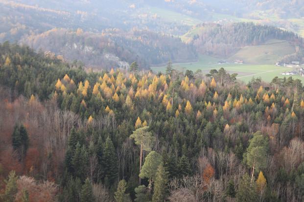 Viel Wald und viel Natur