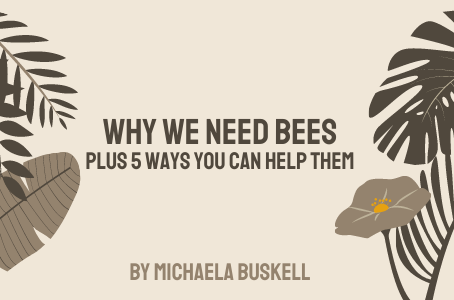 Why we need bees, plus 5 ways you can help them!