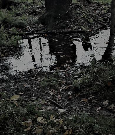 RaindropsRainyDayFilter_edited_edited.jpg