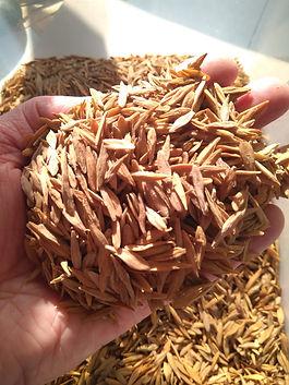 Estrofantina semillas