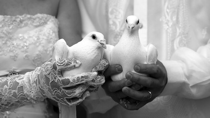wedding-doves-wallpaper-1366x768.jpg