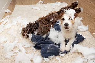 Dog mischief. Two dogs with guilty expre