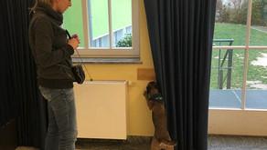 Seminar für fortgeschrittene Bettwanzen-Spürhunde-Teams