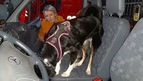 Warum auch Einsatzhunde so viel trainieren…