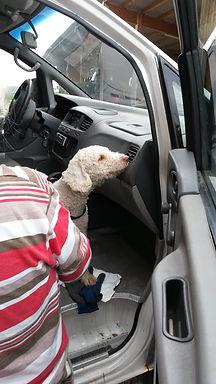 HundeschuleBasel-ProCane-SpürhundTraining