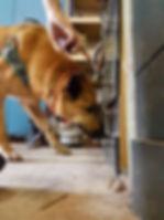 HundeschuleBasel-Spürhund-ProCane-Hundetraining