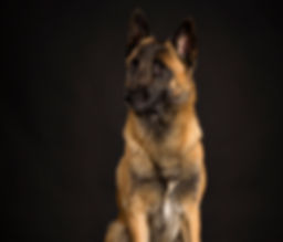 Odins`Askan Malinois Pro Cane Hundecoaching Hundetraining Sempach Station