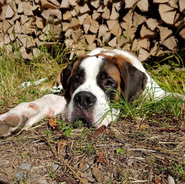 Hundeschule-Hundecoaching-Orpheus-Bernha