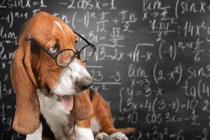 Clever funny dog wearing eyeglasses.jpg