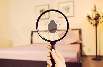 Ungeziefer im Bett - Bettwanzen