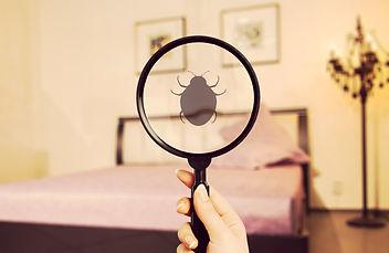 Ungeziefer im Schlafzimmer - Insekten im Bett - Bettwanzen