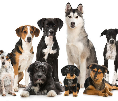 Group of different dogs.jpg