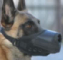Polizeihund Pro Cane Hundecoaching Alain Scheidegger Pöbler Maulkorb