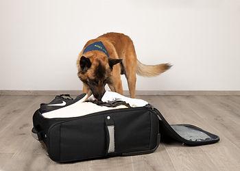 Ungeziefer - Bettwanzen im Reisegepäck finden