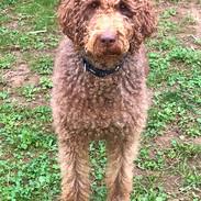 Pro Cane Hundecoaching Hundeschule Hunde