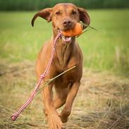 hundetrainer-hund-rennt-spiel-mit-hund
