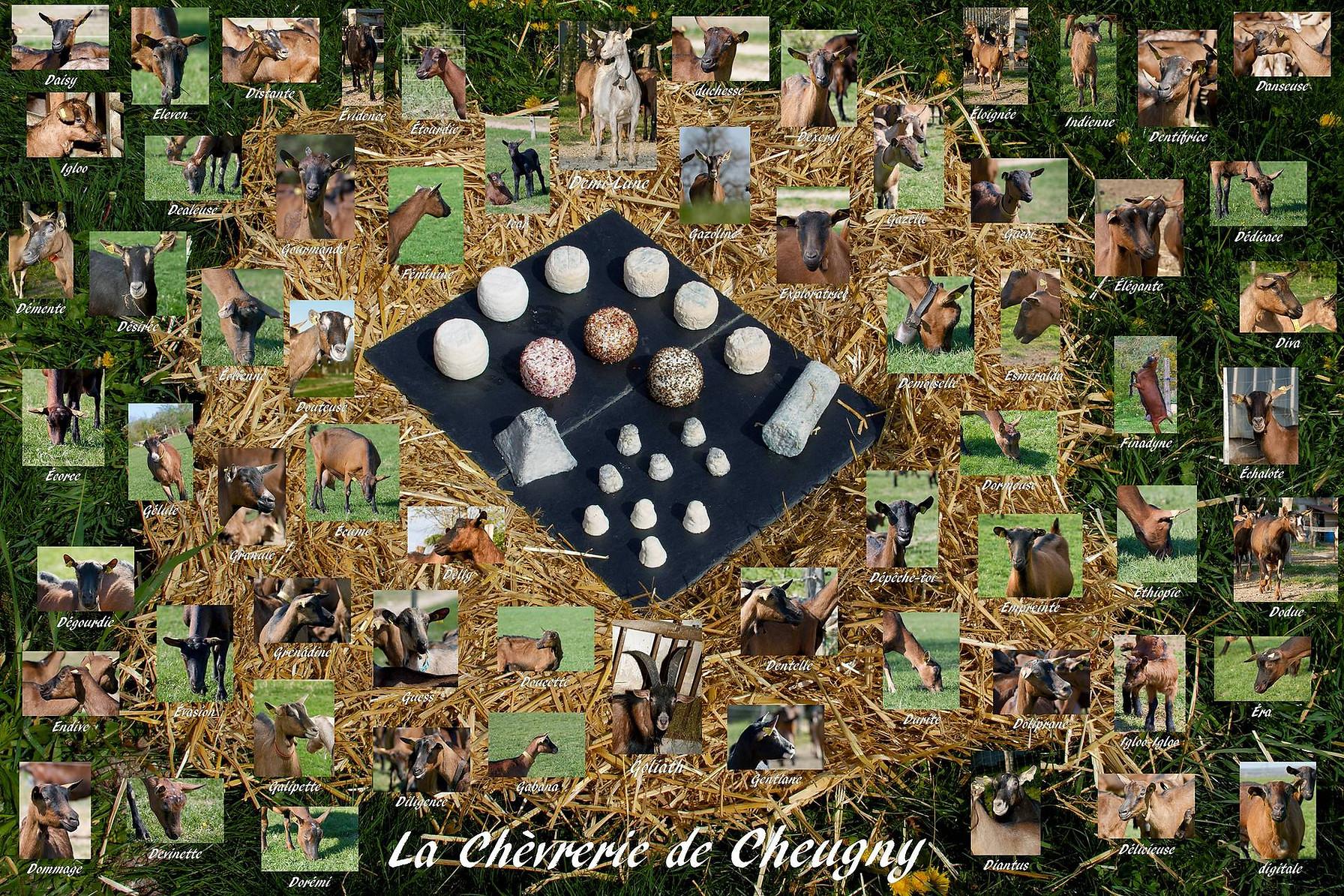 chèrerie de cheugny, fromage de chèvre