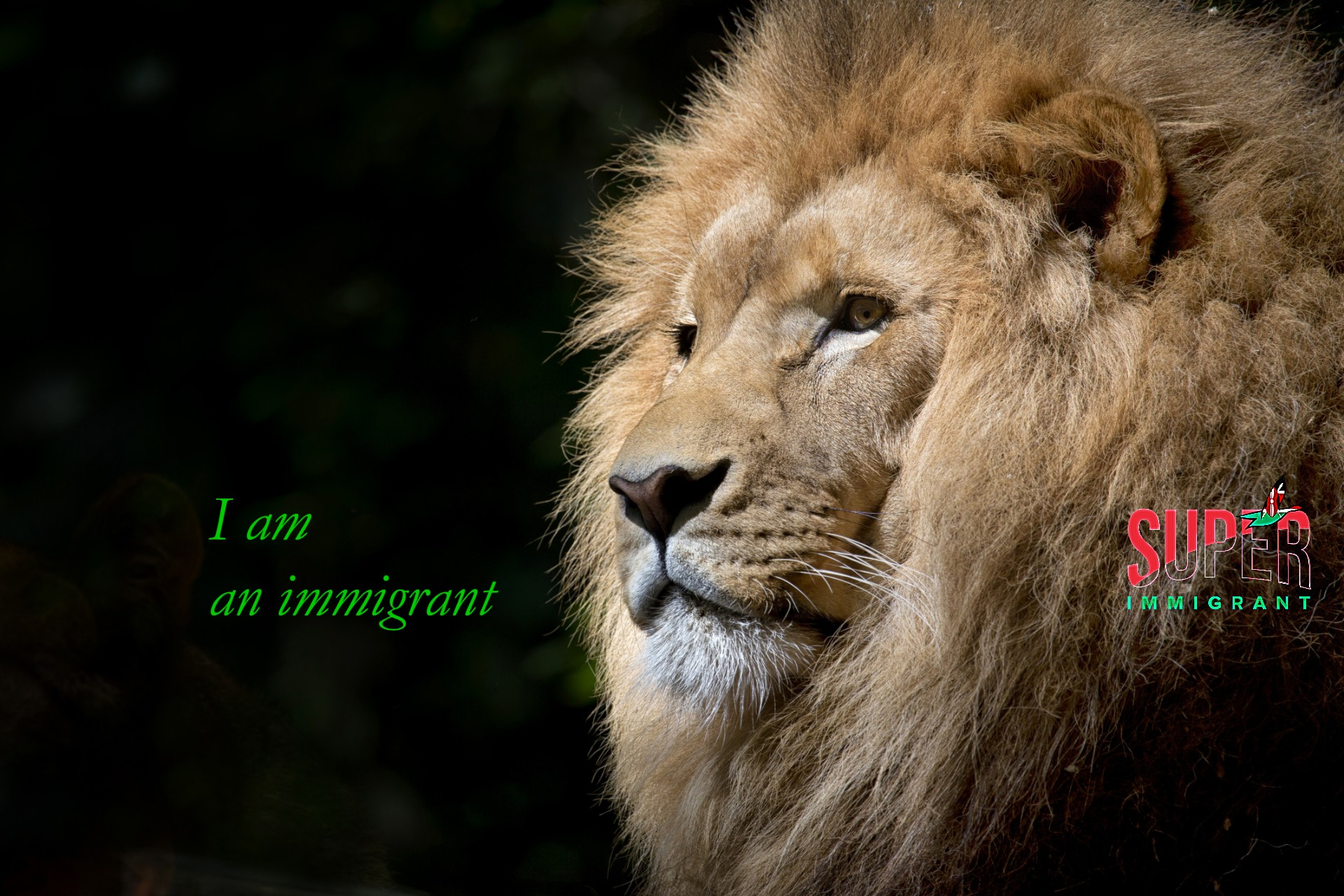 Lion - Super Immigrant (SI New Logo 2)