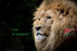Lion - Super Immigrant (SI New Logo 2)
