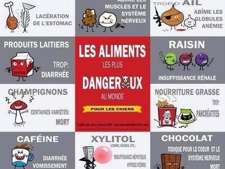 """Avec l'arrivée du froid, voici une petite liste """"d'aliments"""" à éviter pour vos animaux de compagnie"""